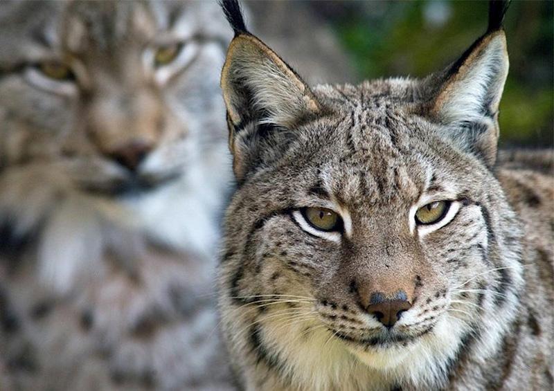COP13 catalogó siete nuevas especies en peligro de extinción
