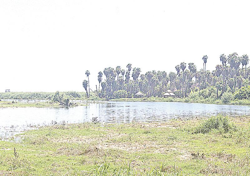 UAM proyecta un humedal artificial, se instalará en Baja California Sur