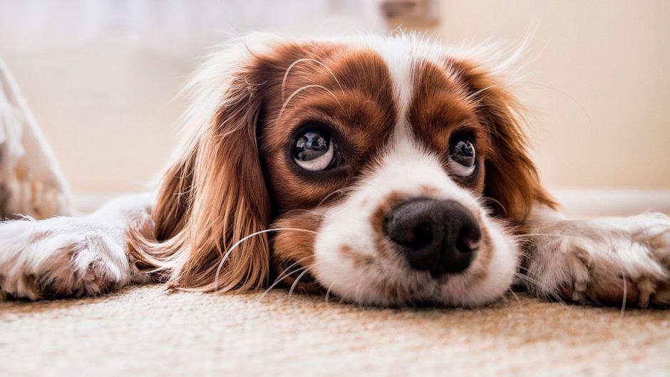 Unión Europea busca detener comercio ilegal de animales