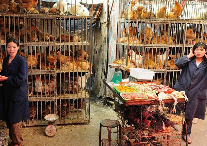 Cerrar mercados de animales vivos es insuficiente para evitar zoonosis como el coronavirus