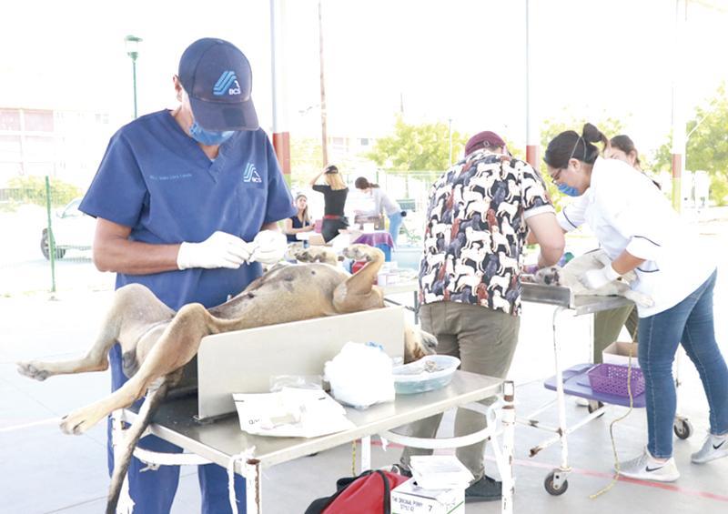 Realizan esterilizaciones caninas y felinas en La Paz