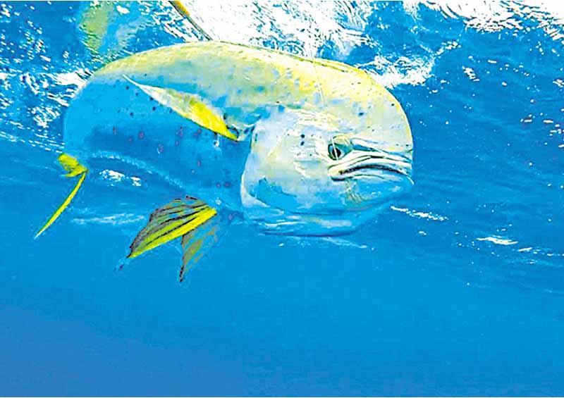 Suelo parejo para pescadores ribereños  y deportivos: Glen Bercovich