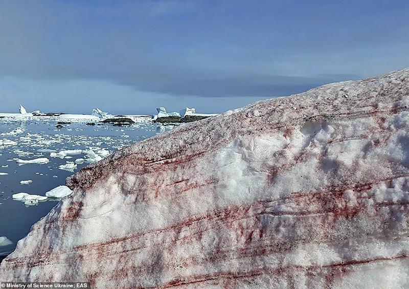 Nieve se torne rojo sangre en la Antártida