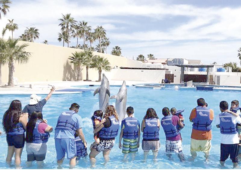 Gestiona Gobierno Municipal terapias con delfines para la niñez con discapacidad