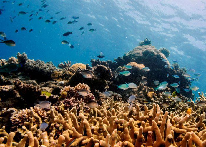 Imprimen en 3D corales artificiales que podrían salvar los arrecifes