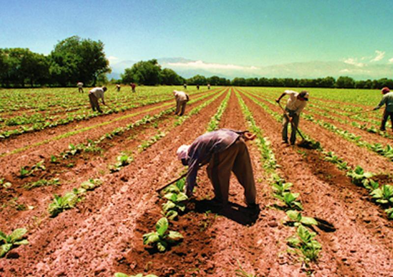 En Canadá, 19 trabajadores mexicanos agrícolas con COVID-19
