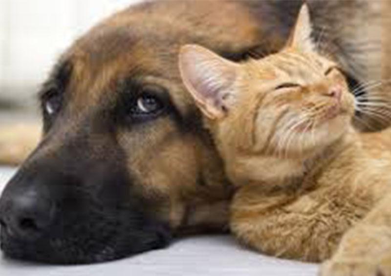EEUU recomienda mantener la distancia entre los animales domésticos por el coronavirus