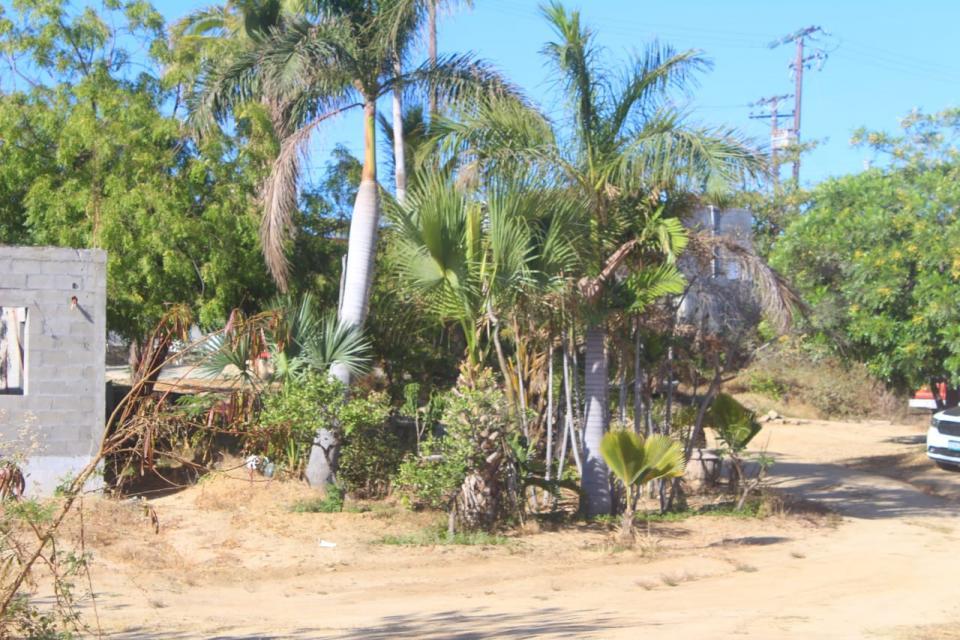 Ciudadana denuncia la constante presencia de ganado en la colonia Rosarito