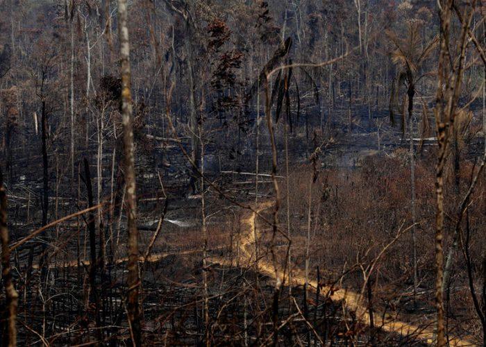 En medio de la pandemia, continua la deforestación del Amazonas