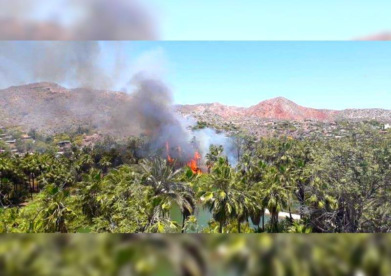 Controlan incendio en los palmares de Heroica Mulegé
