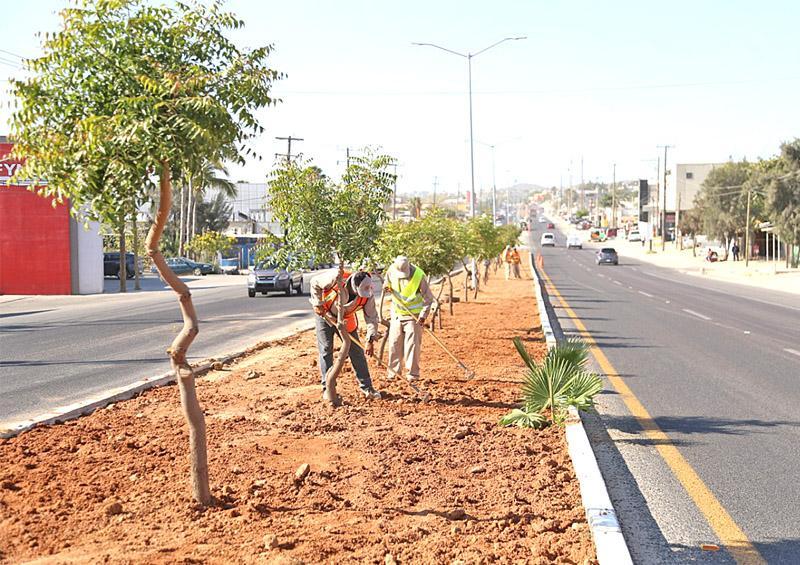 Implementan programa de mejoramiento en camellones de Los Cabos
