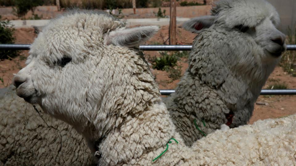 Científicos chilenos descubren fuerte anticuerpo contra covid-19