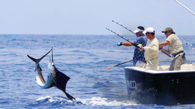 La pesca furtiva se esconde debajo de permisos comerciales