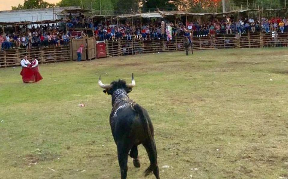 Congreso de Pachuca rechazó prohibir la entrada a menores de edad a corridas de toro y peleas de gallos.
