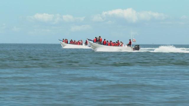 Avistamiento de la ballena gris cancelado por incremento de semáforo epidemiológico