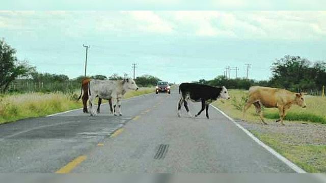 Accidentes en carretera