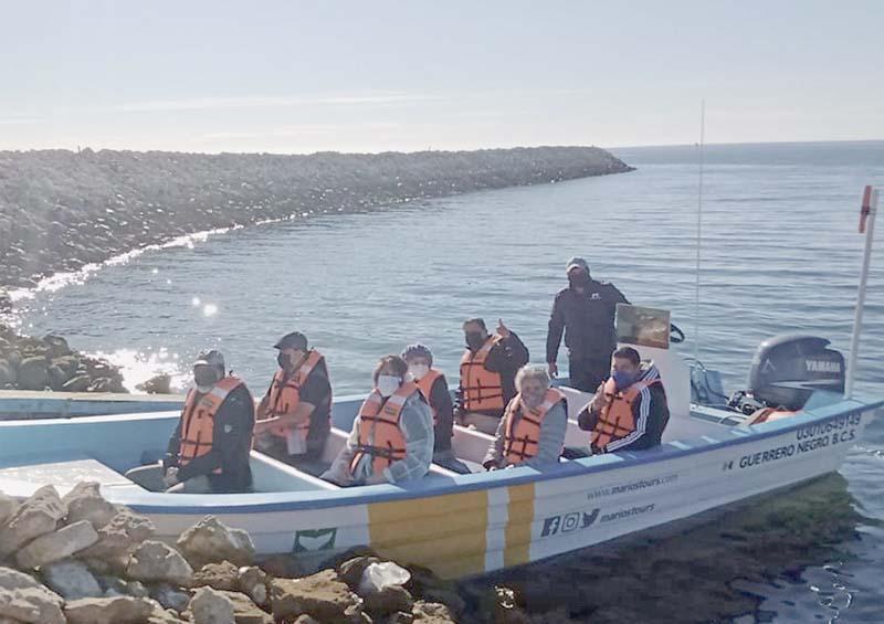 Inicia en Mulegé y Comondú avistamiento de ballena gris