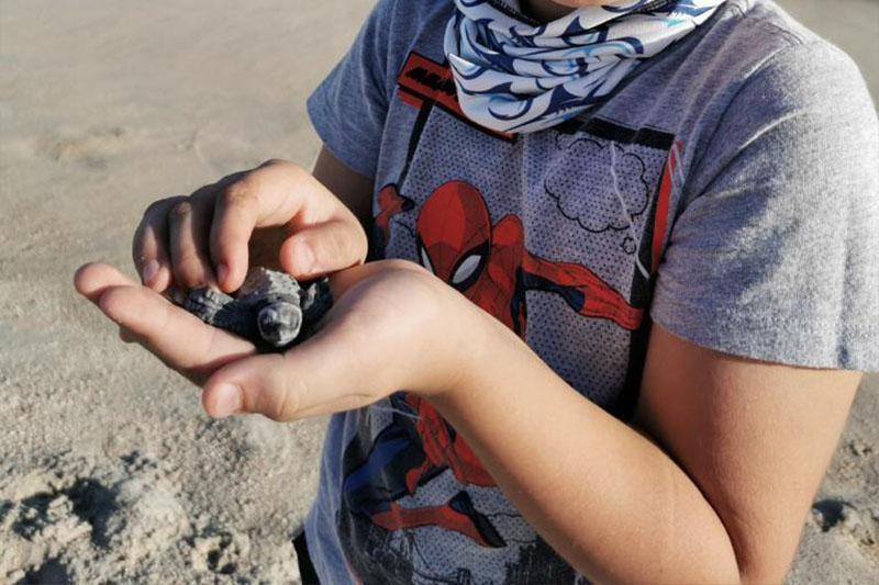 Niño salva a tortuga marina