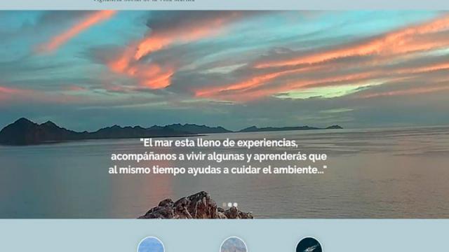 Con transmisiones en vivo, se podrá avistar la ballena azul en Loreto