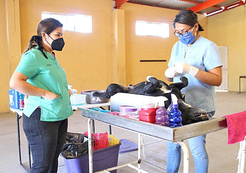 Salud estatal desarrolló jornada de esterilización de mascotas