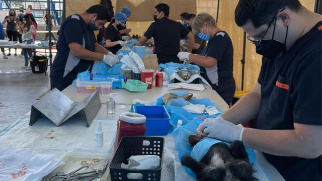 Campaña de esterilización en El Zacatal