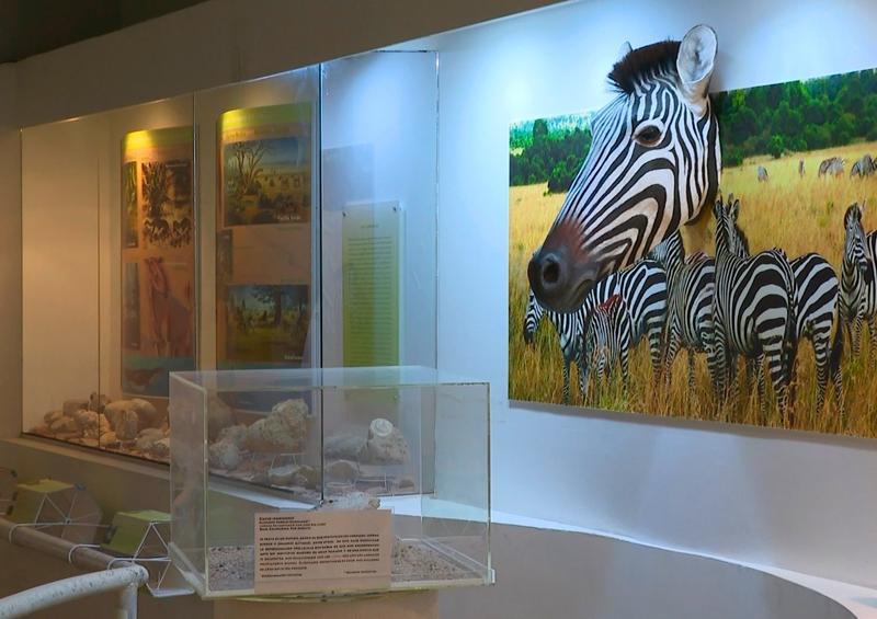 Museo de Historia Natural de Cabo San Lucas, abierto al público