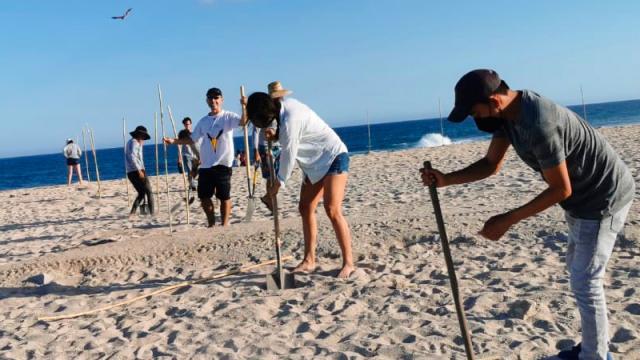 Protegen zona de anidación de gallito marino en Estero