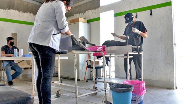 Jornada de esterilización canina y felina en San Antonio