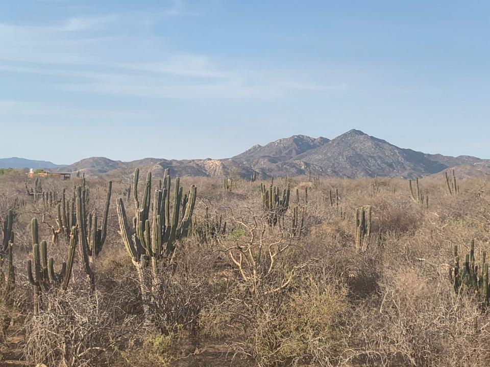 Zona de La Candelaria en sequía
