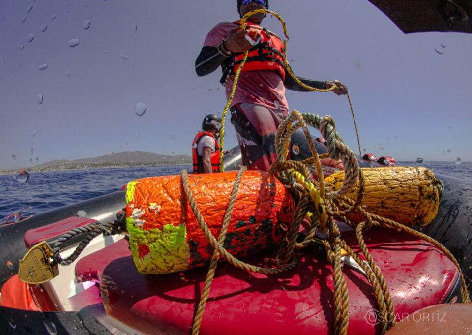 Raben rescues humpback whale in Los Cabos